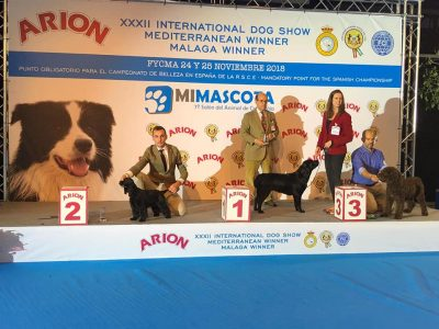 Janna- Malaga International 2 Best Puppy in Group VIII (Cocker Spaniel)